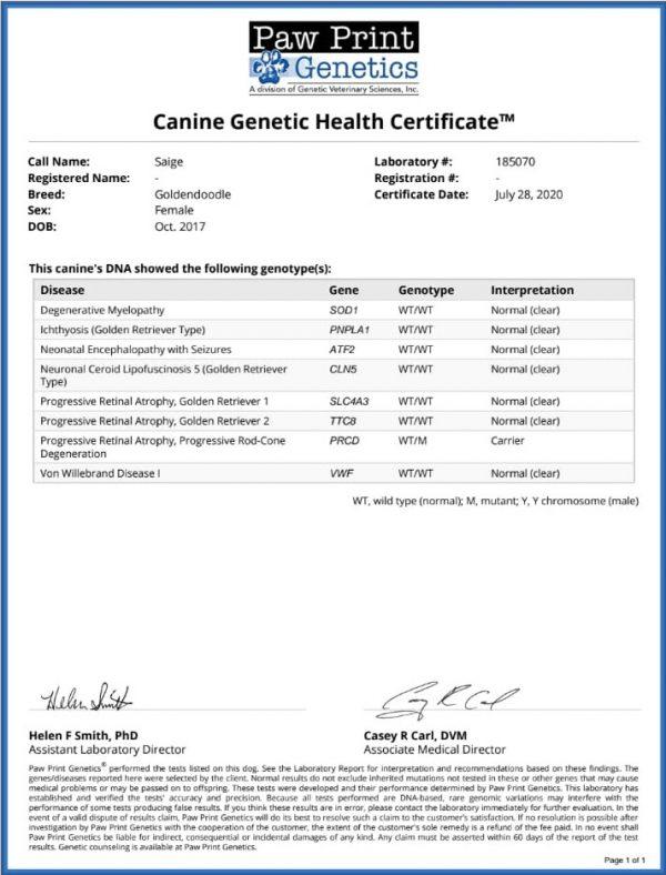 Saige Health Test